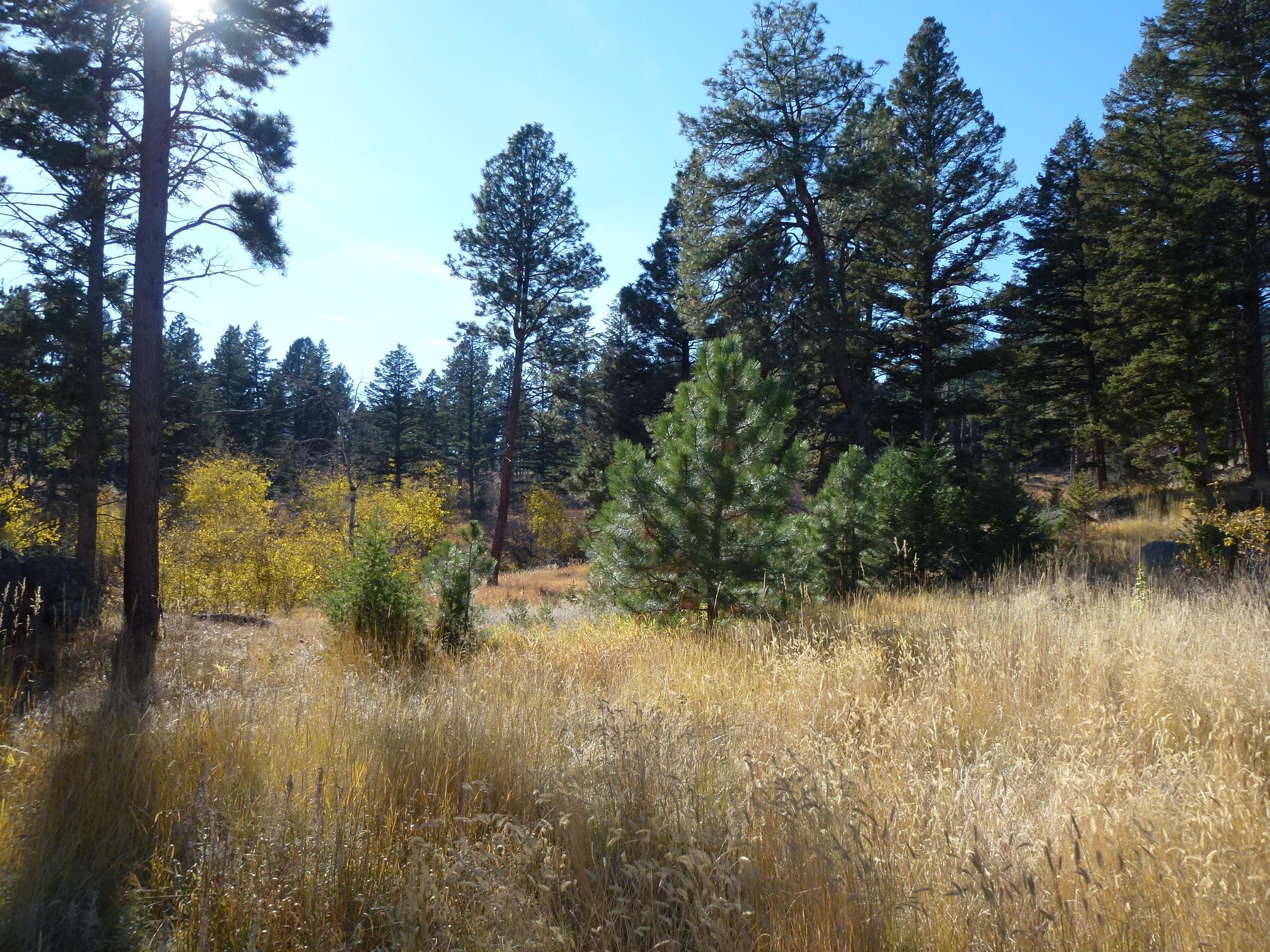 1 Elk Drive, Clancy, MT 59634