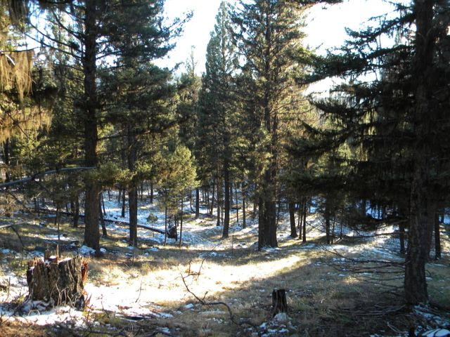 Lot 65 Spring Creek Drive, Seeley Lake, MT 59868