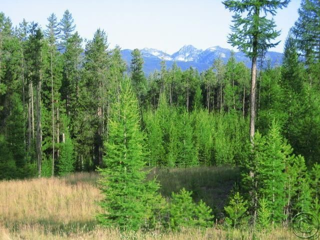 Lot 4 Stoner Lake Road, Condon, MT 59826