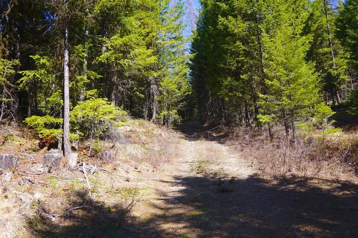 A private wooded 20 acre Montana property ! Are you tired of noise, traffic and smog?? Take a look at this 20 acre property situated a few miles from Trego Montana, situated close  to thousands and thousands of acres of national Forest, beautiful Montana Lakes  ! Possible owner financing available with approved credit.Adjoining 37 acres available as well, see MLS # 21906105. Call Gideon Yutzy at 406-261-1246 or your real estate professional