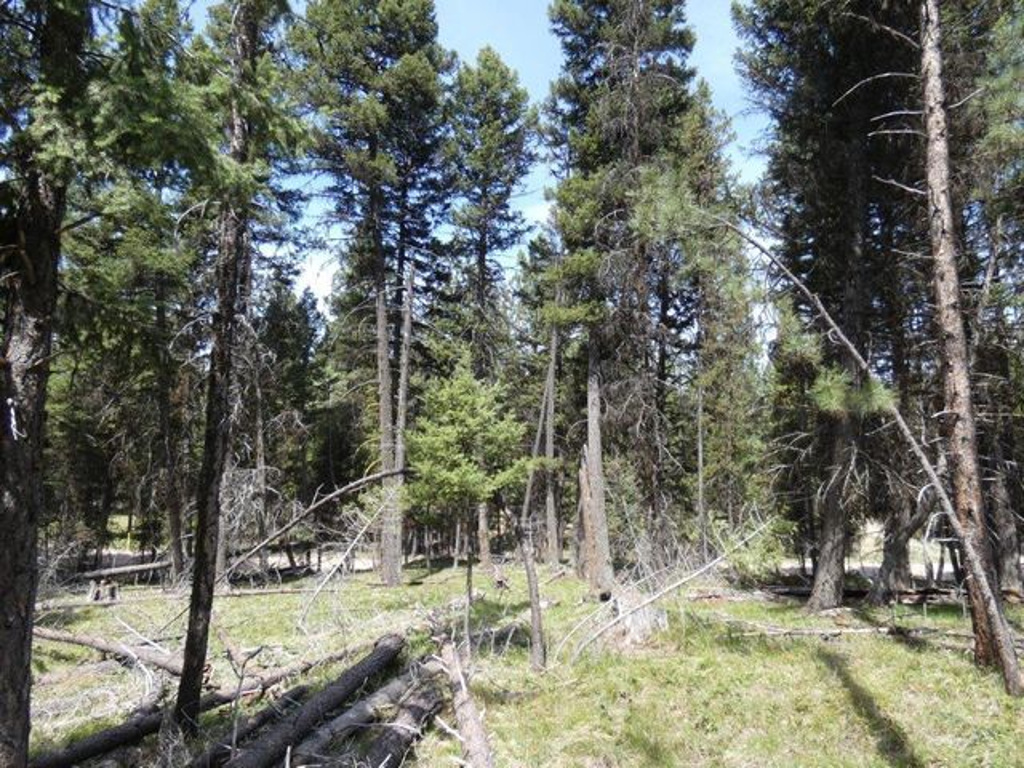 1274 Grandview Drive, Seeley Lake, MT 59868