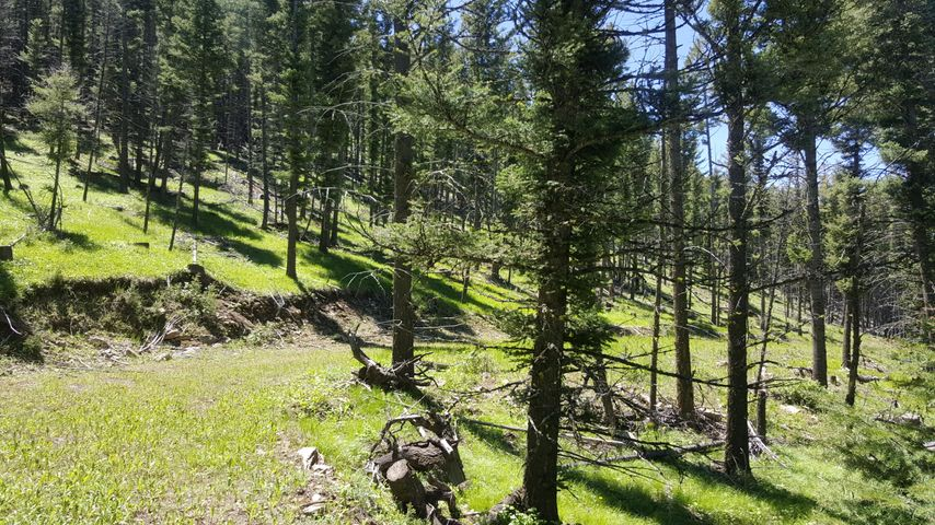 Lot 114 Hoover Creek Road, Helmville, MT 59843