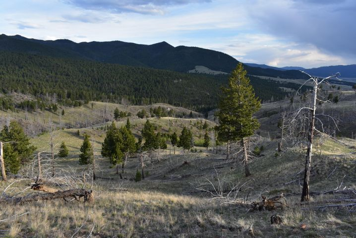 Tbd Nursery Creek Road Lot 40, Boulder, MT 59632