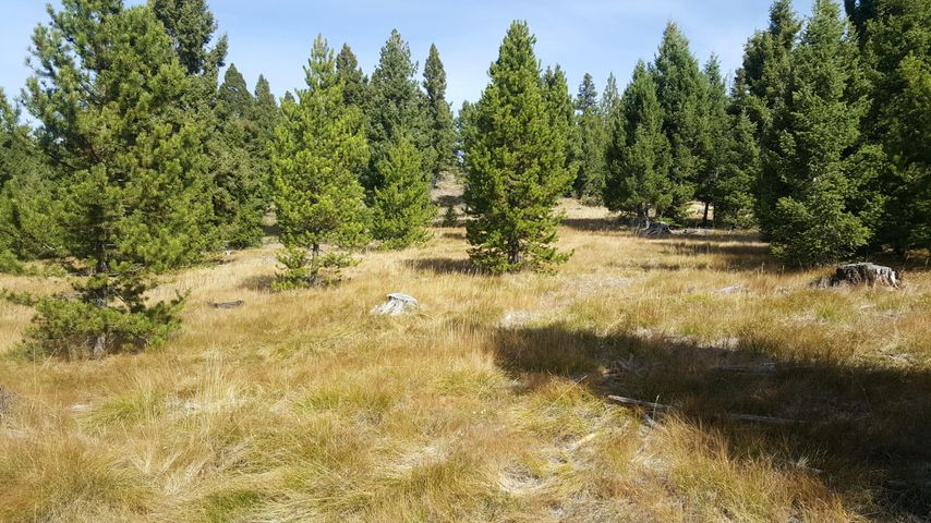 Lot 41 Muskrat Road, Helmville, MT 59843
