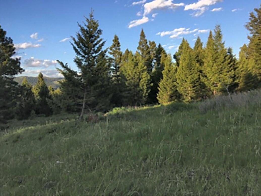 Tbd 160 Acres Braziel Creek, Helmville, MT 59843