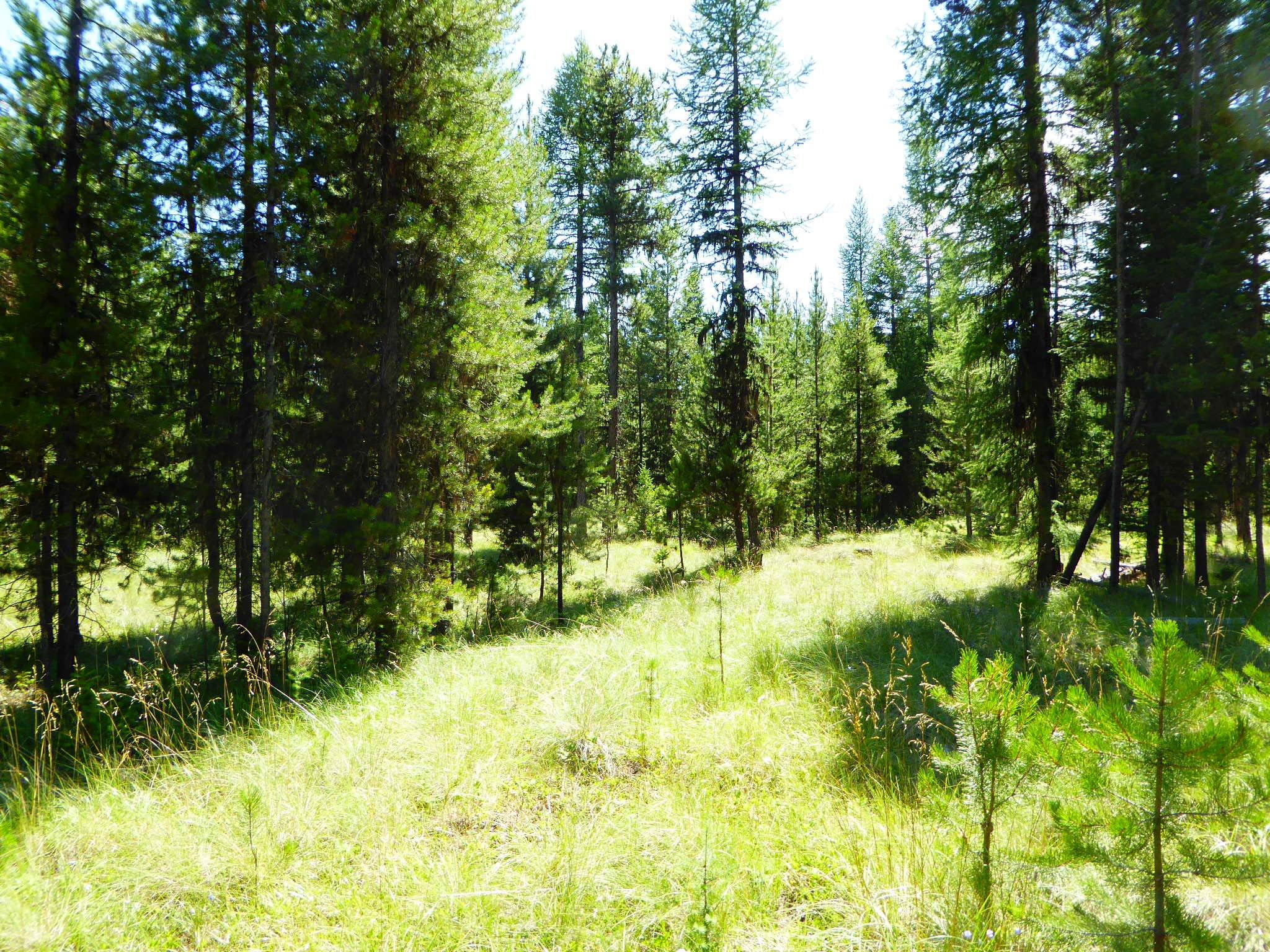 178 Idaho Hill Road, Marion, MT 59925