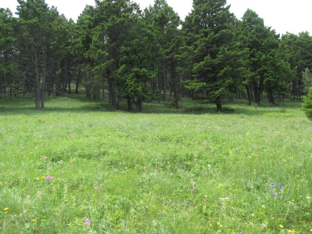 Salt Lake Wildlife Way, Jefferson City, MT 59638