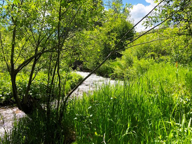 5 Lots ''Creekside Retreat'', Pony, MT 59747