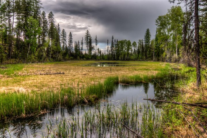 Parcel B Hill Meadows Road, Whitefish, MT 59937
