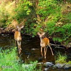 Stoner Creek Deer