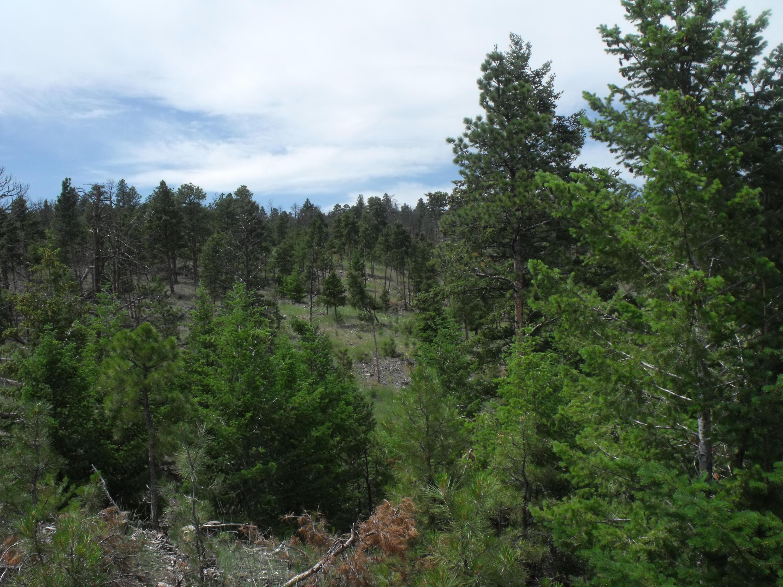 L25 Evergreen, Helena, MT 59602