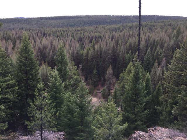 Nhn Ivor Creek Road, Trego, MT 59934