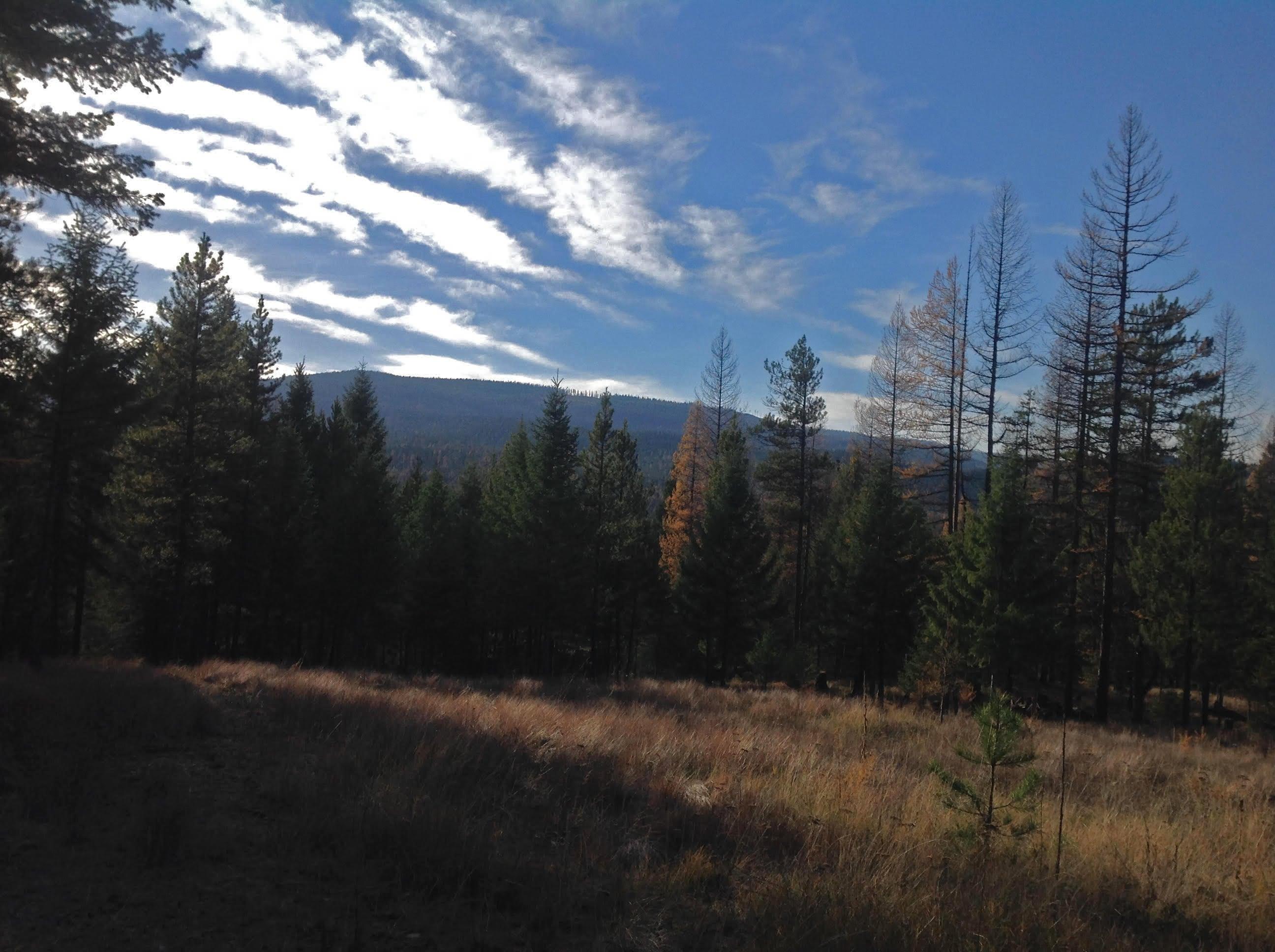673 Soaring Eagle Trail, Fortine, MT 59918