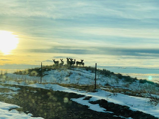 0 Yellowstone Trail, Huntley, MT 59037