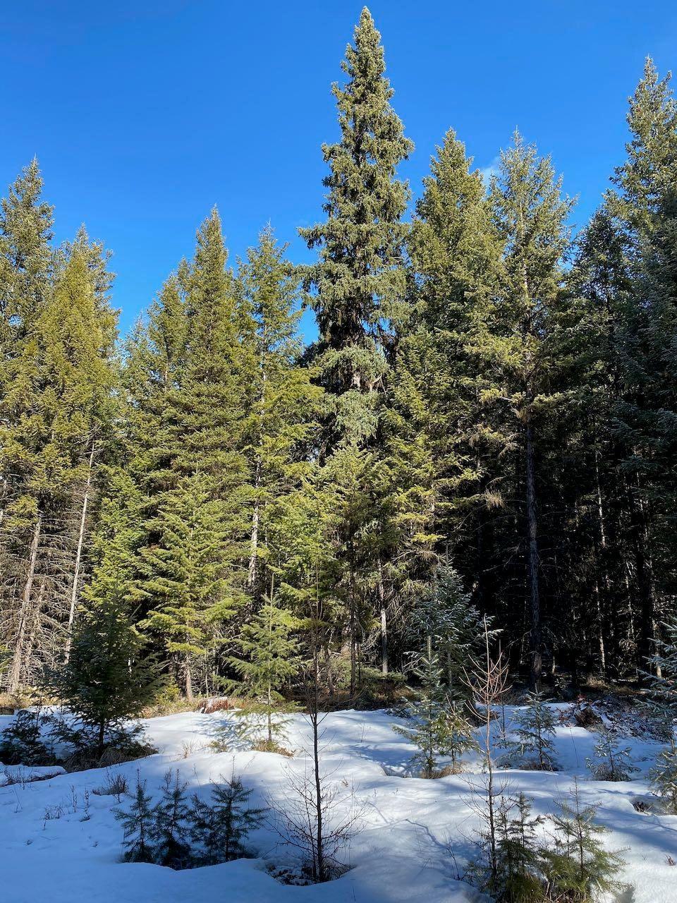 211 Tomahawk Trail, Fortine, MT 59918