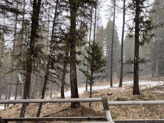 356 Coyote Ridge Pass, Fortine, MT 59918