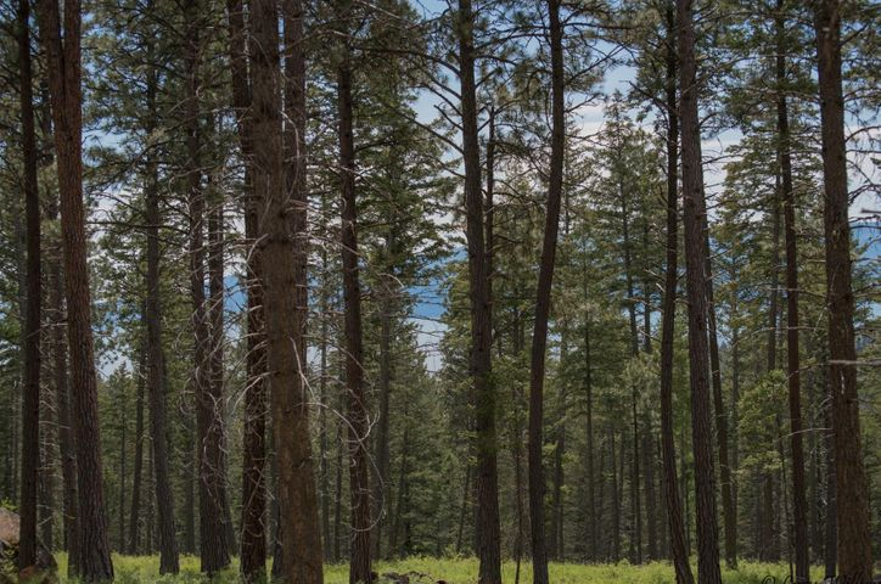 Nhn Dancing Bear Trail Tract 2, Bigfork, MT 59911