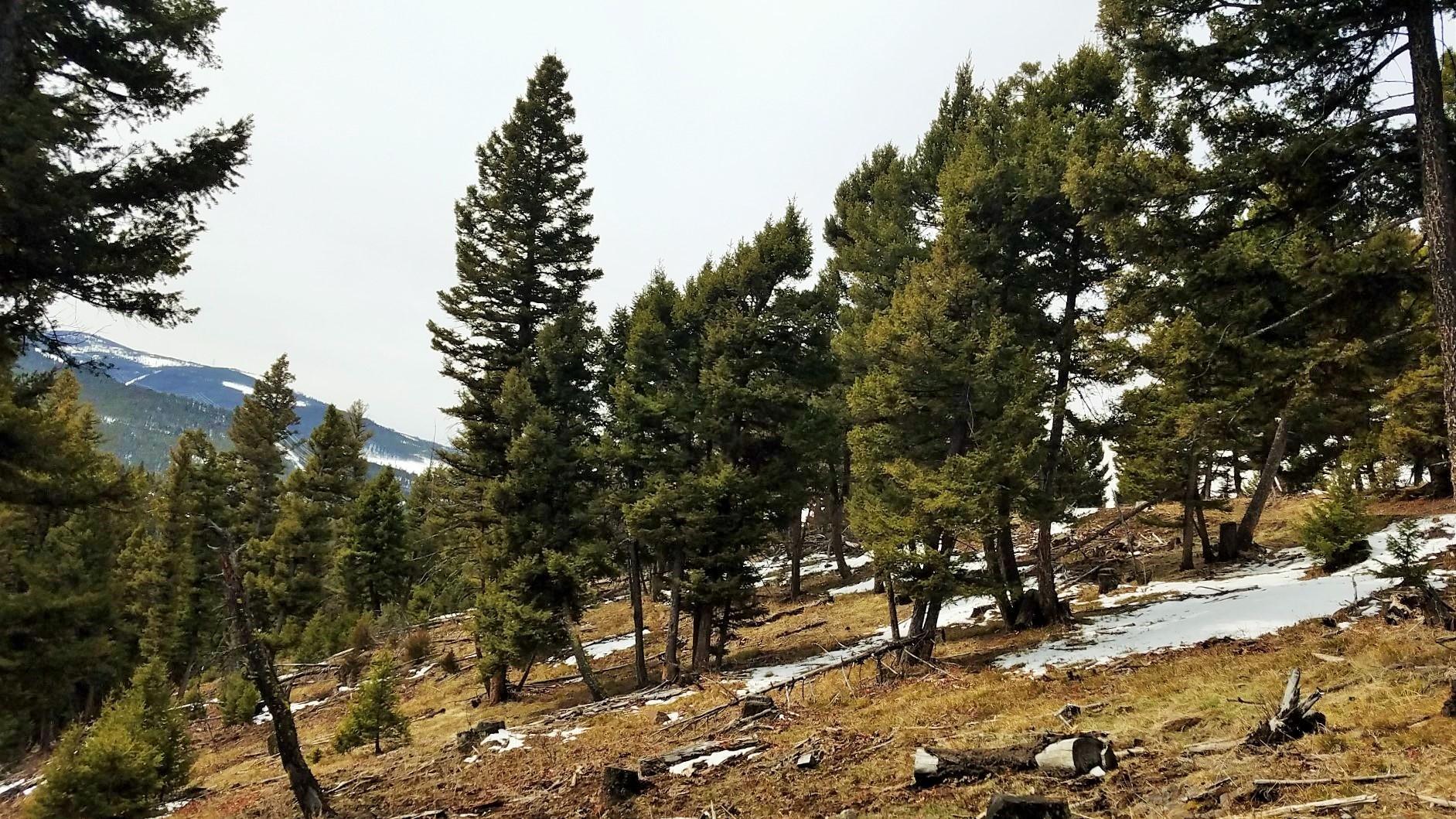 Tbd Wake Up Jim Road American, Deer Lodge, MT 59722