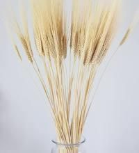 4th Lane N E, Dutton, MT 59433