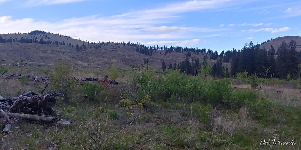 Nhn Mill Creek Road, Hot Springs, MT 59845