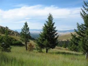 5349 Arnica Road, Missoula, MT 59803