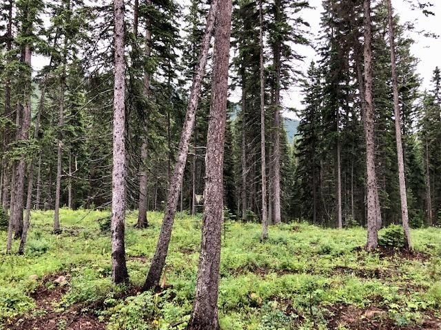 Nhn Private/Unnamed Road (1.23 Ac), Essex, MT 59916