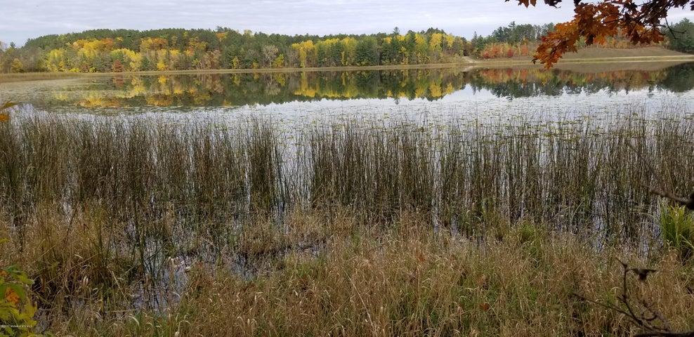 Privacy & Beauty Natural Shoreline