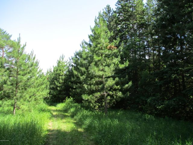 Nicely Wooded Property