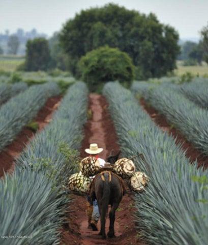 Terreno Guanajuato>San Miguel Allende>La Lejona - Venta:2.639.400 Pesos - codigo: 21-201