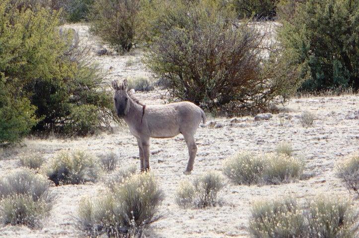 6506 Black Burro, Williams, AZ 86046