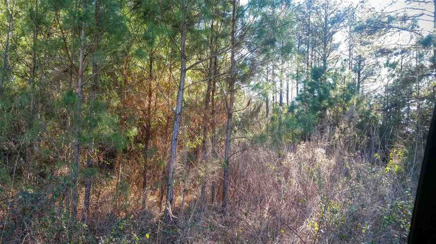 This property has been surveyed into 8 lots all about 1/2 acre in size with 3 bedroom septic's. Septic permits and surveys on file. Call today for more information. Property is located to the right of 1135 Ben Williams.