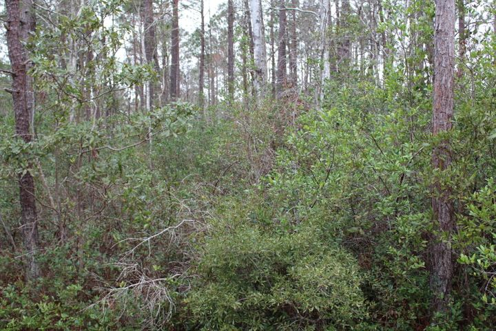 Nice level lot  in Boiling Springs Lakes with a great price. Excellent opportunity to build that dream home. Convenient to South Port and the beaches at Oak Island