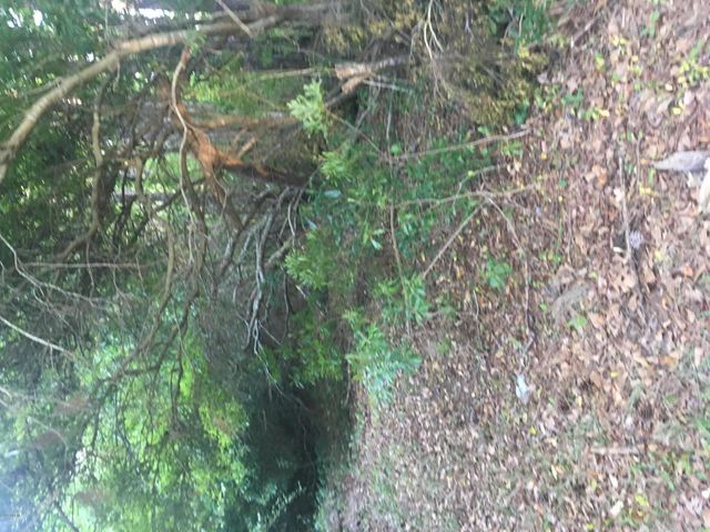 New Verona, .55 ac wooded lot. No restrictions to the type of home. Will need a septic system for home. Close to beaches, restaurants, shopping, Marine Base, city.