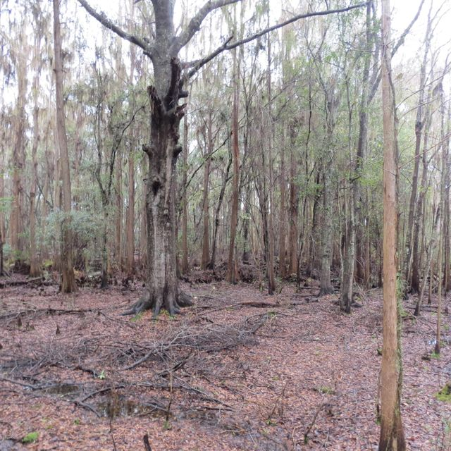 00 136TH, STARKE, FLORIDA 32091, ,Vacant land,For sale,136TH,807824