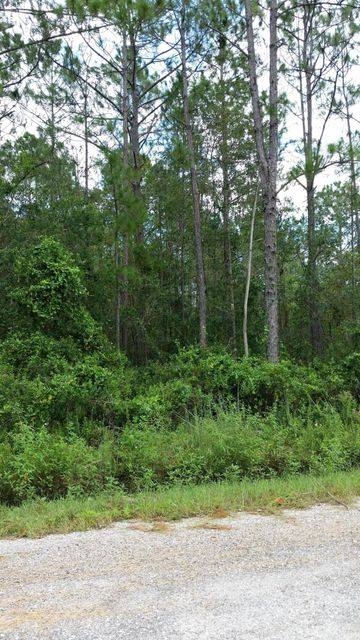 9800 DILLON, HASTINGS, FLORIDA 32145, ,Vacant land,For sale,DILLON,901209