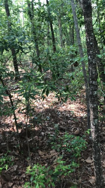 MEADOW FARMS- GREEN COVE SPRINGS- FLORIDA 32043, ,Vacant land,For sale,MEADOW FARMS,934611