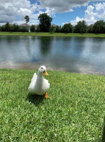 Lots of friendly duck and turtle live in the lake in addition to fully stocked fish!