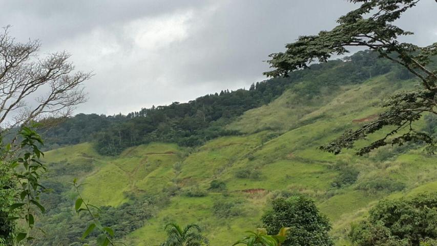 Terreno Panama>Pacora>Cerro Azul - Venta:42.000 US Dollar - codigo: 15-2341