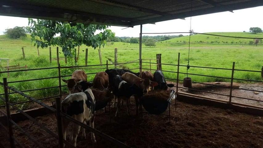Terreno Veraguas>Veraguas>Veraguas - Venta:2.300.000 US Dollar - codigo: 18-8373