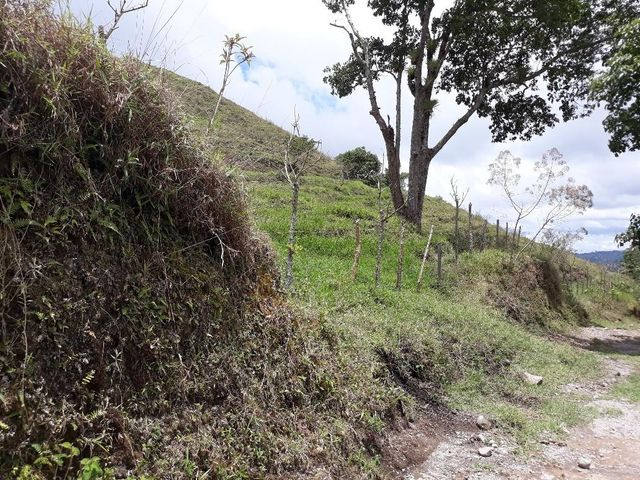 Terreno Chiriqui>Remedios>Remedio - Venta:1.500.275 US Dollar - codigo: 19-471