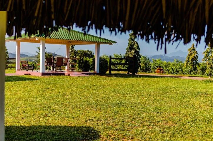 Terreno Panama>La chorrera>Chorrera - Venta:311.700 US Dollar - codigo: 19-1988