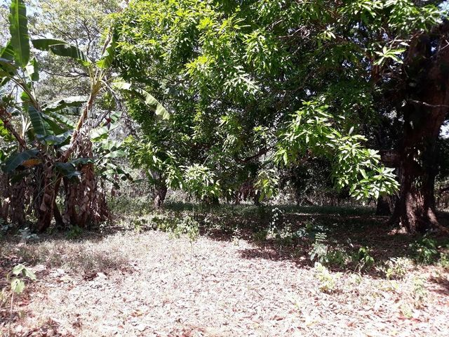 Terreno Chiriqui>San Felix>Lajas Adentro - Venta:25.000 US Dollar - codigo: 19-4812