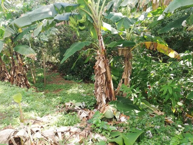 Terreno Panama>La chorrera>Chorrera - Venta:225.000 US Dollar - codigo: 19-2258
