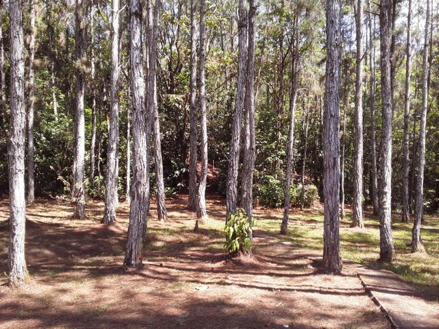 Terreno Panama>Pacora>Cerro Azul - Alquiler:260.875 US Dollar - codigo: 19-4774