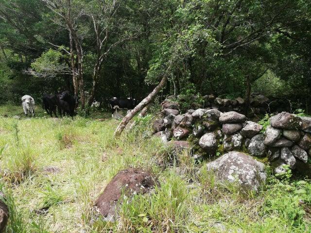Terreno Chiriqui>Boquete>Alto Boquete - Venta:22.000 US Dollar - codigo: 19-6456