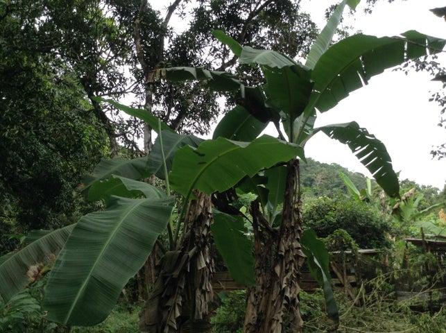 Terreno Panama>Chilibre>Chilibre Centro - Venta:254.800 US Dollar - codigo: 19-6835