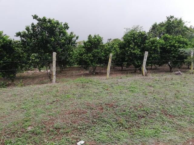 Terreno Chiriqui>Dolega>Rovira - Venta:61.000 US Dollar - codigo: 19-7380