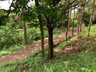 Terreno Panama>Pacora>Cerro Azul - Venta:161.700 US Dollar - codigo: 19-8310