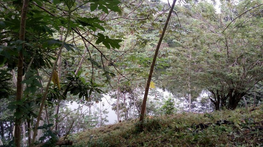 Terreno Panama>Panama>Las Cumbres - Venta:860.000 US Dollar - codigo: 19-5939
