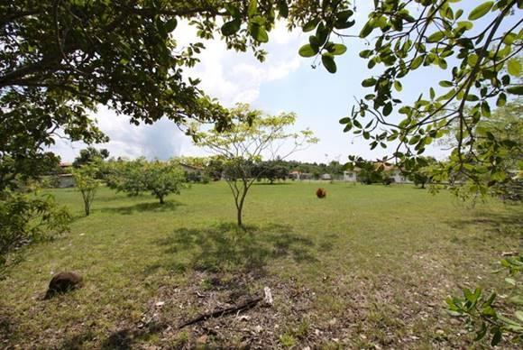 Terreno Panama>San Carlos>San Carlos - Venta:38.000 US Dollar - codigo: 20-12455